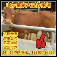 大型养牛基地