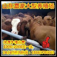 肉羊的市场价格