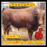 肉羊养殖风险河北