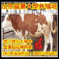 2017年种牛犊价格