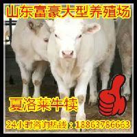 小公牛养殖场