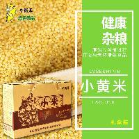 东北黑龙江大庆特产老街基尚品小米月子米、