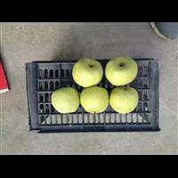 2017年砀山梨价格跌至最低点,梨价格