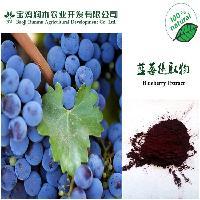 现货供应蓝莓提取物25%,纯天然真实原料