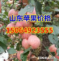 烟台红富士苹果产地价格