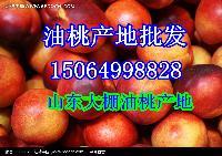 山东油桃产地,大棚油桃价格,油桃批发价格