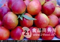 油桃 油桃批发价格  大棚油桃价格查询详细