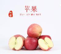 山东苹果批发基地|产地直售