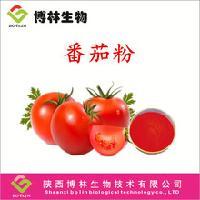 番茄提取物 番茄粉* 现货包邮