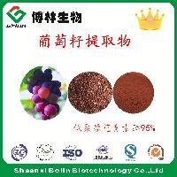 葡萄籽提取物 原花青素 植物提取物