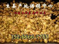 山东工厂供应农产品 新鲜生姜 出口优质产品