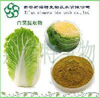 白菜提取物10:1   斯诺特厂家直销   果蔬提取粉