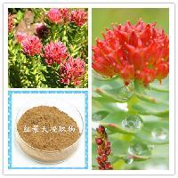 红景天提取物 红景天提取物 10%  红景天甙红景天苷 斯诺特厂家