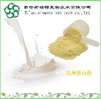 乳清蛋白粉99%    斯诺特厂家大量现货   乳清蛋白