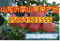 优质山东省红富士苹果产地在哪里