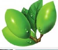 槟郎提取物10:1 槟榔碱  1公斤起订  大量库存 批发价格