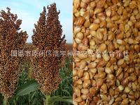 高粱膳食纤维 高粱纤维粉  高粱提取物 高粱粉