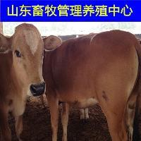 肉牛基地推广中心优质牛品种