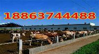 哪里出售种公牛
