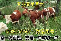 新疆卖小牛的地方
