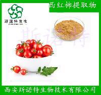 西红柿提取物 20:1 番茄粉  现货 斯诺特厂家