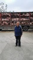 鄂美种猪落户江西樟树牧工商公司