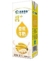 乳泰乳+香蕉牛奶