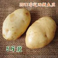 新货杭州铃薯白皮鲜土豆非转基因蔬菜土豆
