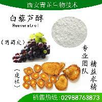 虎杖提取物 白藜芦醇 10-98%