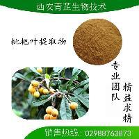 枇杷叶提取物 熊果酸25% 50% 90% 98%