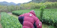 广西南丰蜜橘苗多少钱一棵?