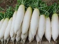 农产品蔬菜食材配送一站式采购配送食堂配送服务--宏鸿白萝卜