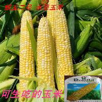 """""""超甜水果玉米种子""""杂交种 批发 基地用种玉米种子"""