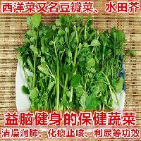 西洋菜种子 豆瓣菜种子 多年生特菜种子 基地用种