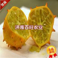 天赐良果-火星果种子 海参果种子 火参果种子100粒