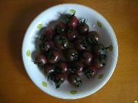 黑色番茄种子 观赏番茄种子 小番茄种子