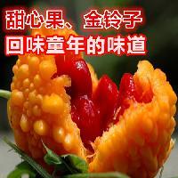 甜心果种子 金铃子种子 特色水果种子 批发100粒