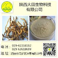 大田生物 玉竹提取物   玉竹多糖 5%--80%