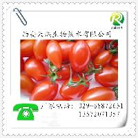 番茄红素 番茄提取物