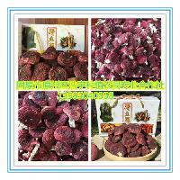 紅菇粉 紅蘑菇提取物 紅香菇純粉 紅蘑菇浸膏粉 固原浩宇