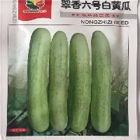 白色水果黄瓜种子,白黄瓜种子