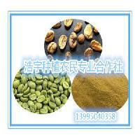 绿咖啡豆提取物  绿原酸含量50% 绿咖啡豆浓缩粉 绿咖啡豆粉