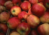 苹果提取物 苹果粉巨邦植物