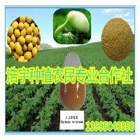 大豆胚芽粉 红豆胚芽粉 绿豆粉 豌豆粉等杂粮豆类全胚芽粉