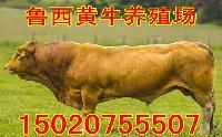 山东省牛羊养殖基地