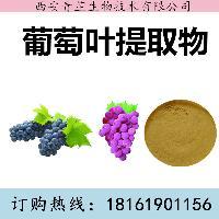 葡萄叶提取物厂家 葡萄叶提取物价格