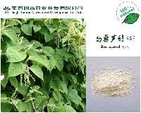 白藜芦醇98%