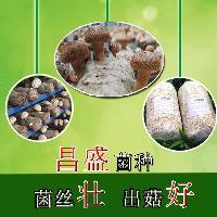 专业定制优质高产香菇菌种菌棒厂家长期供应批发