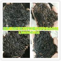 菰米  雁膳 菰粱 食用 茭米批发价格 黑米 野米 苏比利尔野米浩宇