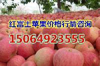 山东红富士苹果价格今年冷库红富士苹果价格